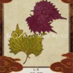 紫蘇(しそ)
